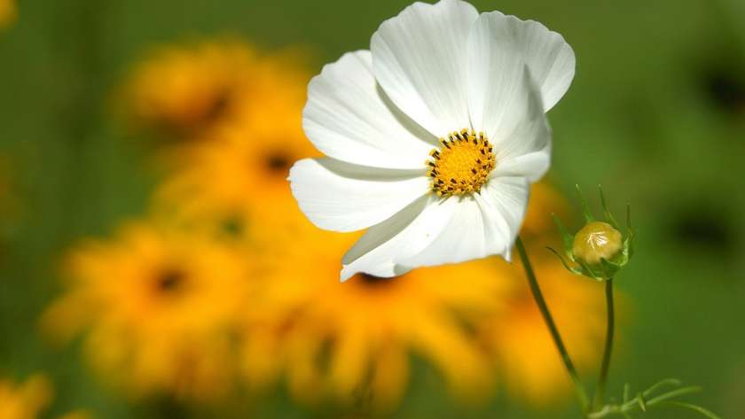 Flowers Can Make You Happier and Healthier