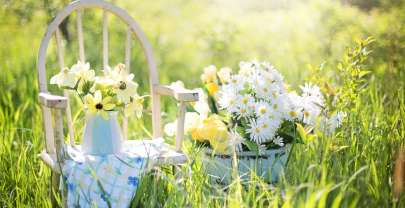 Lower your risk of dementia with gardening